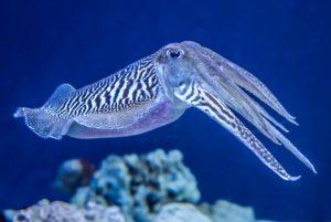 cuddlefishpress